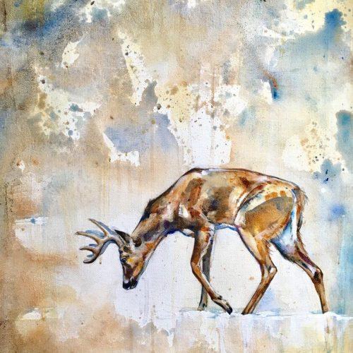 white-tail-buck1